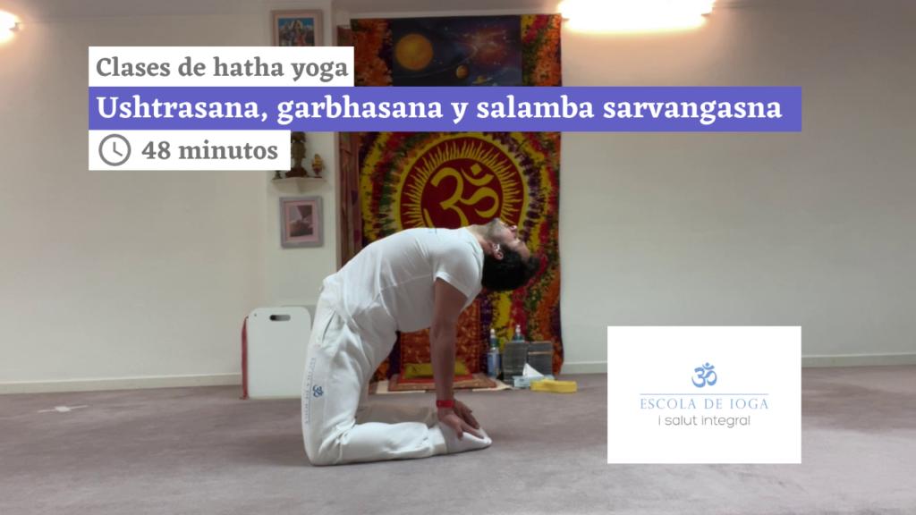 Hatha yoga: ushtrasana, garbhasana y salamba sarvangasana